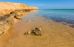 رحلة إلى محمية راس محمد بالباص